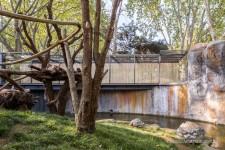 Fotografia de Arquitectura Espacio-orangutanes-zoo-barcelona-forgas-02-SG1629_2006-2