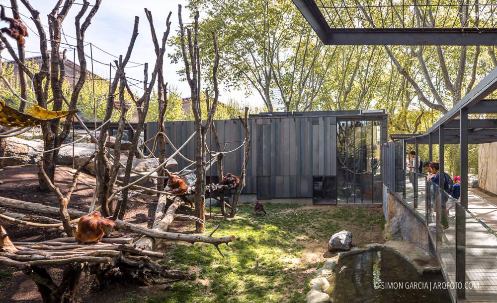 Zoo Barcelona reforma espacio de los orangutanes zoo de barcelona simón